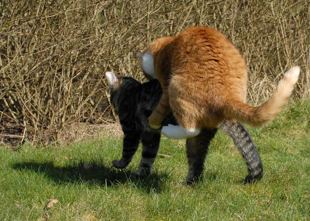Ninja fight of two cats (17 pics)