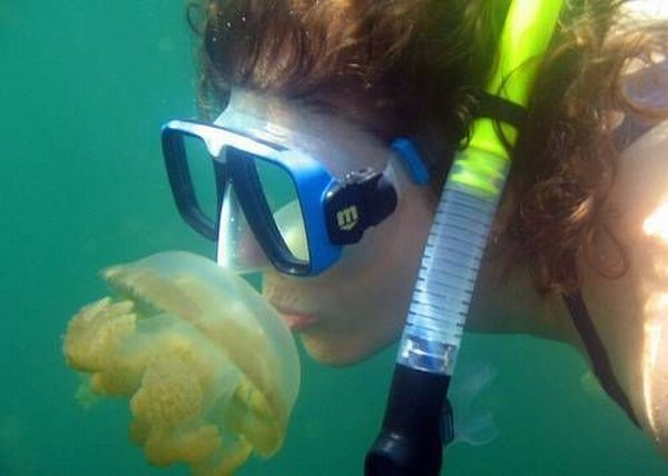Swim among thousands of jellyfish – the most exciting adventure in Palau (17 pics + 1 video)