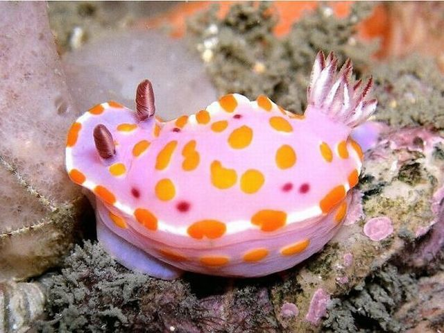 The most extraordinary sea Inhabitants (20 pics)