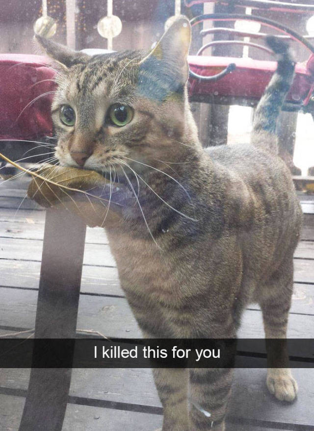 A Hilarious Insight Into The Real Lives Of Animals Via Snapchat