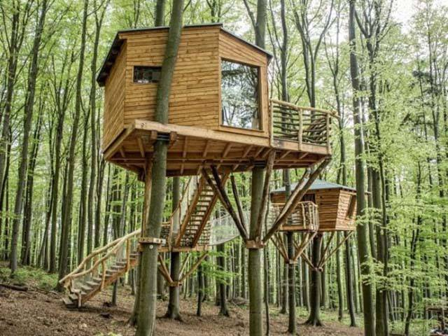 Everything Is Much Better When You Live In A Forest So High Above The Ground