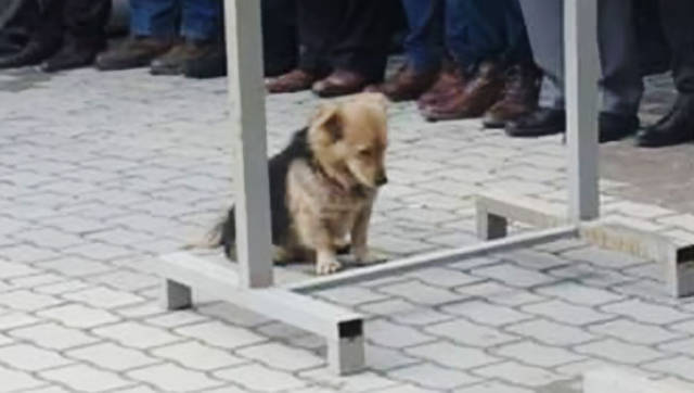 This Dog Is The Symbol Of Eternal Loyalty