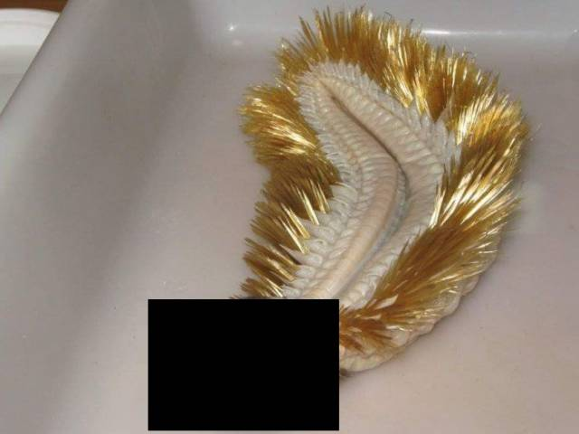 Probably, This Worm Is Another Reason Why People Don't Live In Antarctica