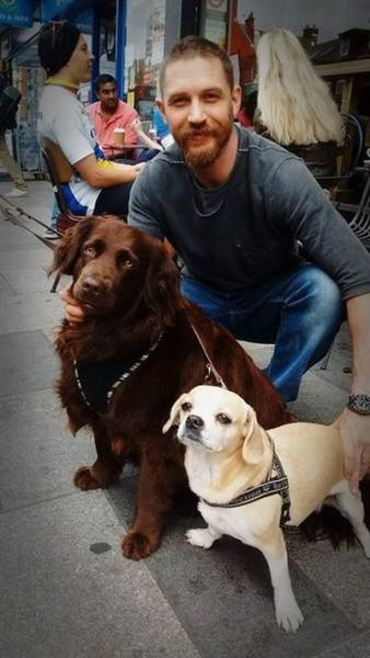 Tom Hardy + Dogs = Love Forever