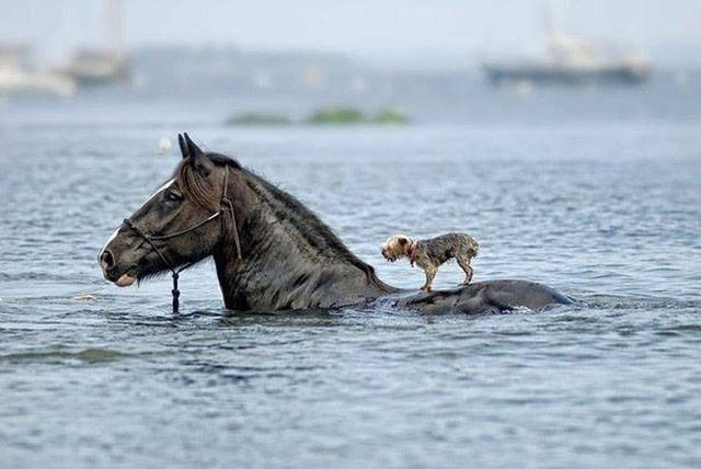 Fine Examples When A Picture Says More Than Just A Thousand Words