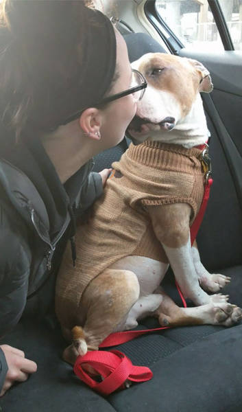Pitbull Can't Express Love To His New Mistress Strongly Enough After He Was Adopted And Saved From Death