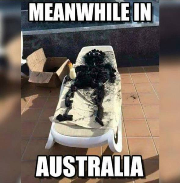Australia Struggles Against The Heat With Their Last Weapon – Humor