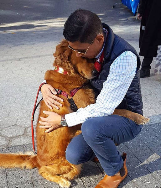 """Free Hugs"" Receives It's Dog Version Via This Cute Golden Retriever"