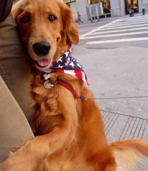 """Free Hugs"" Receives It's Dog Version Via This Cute Golden Retriever"