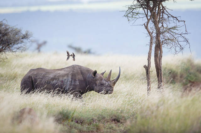 National Park Has Found A Very… Unconventional Way To Save Rhinos