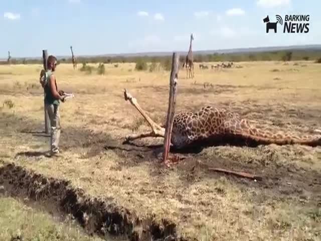 Saving Private Giraffe