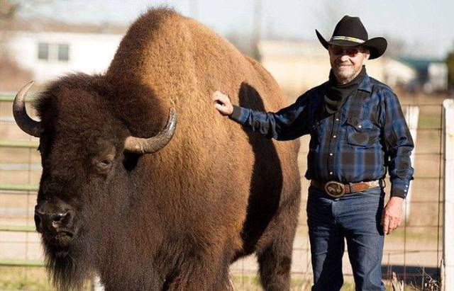 The Thing Is – This Pet Is Not Even The Strangest Thing Texas Has To Offer