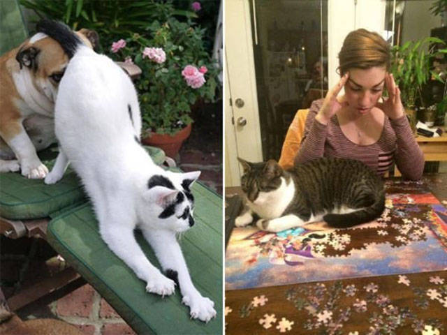 It's Strange That Humans Don't Like What Their Cat Masters Do For Them