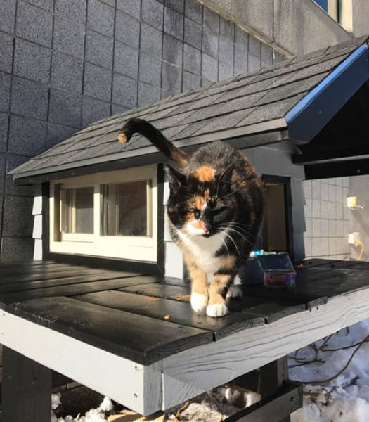 This Cat Got A Better Apartment Than Many People