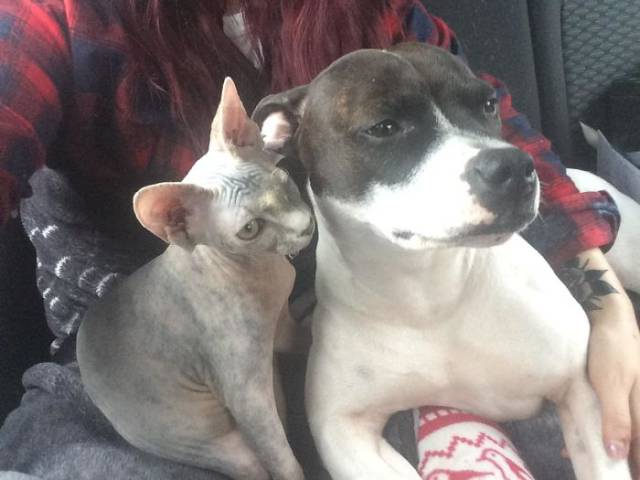 Never Be Afraid Of Adopting More Pets!