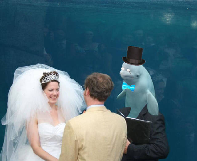 It's Kinda Embarrassing When Beluga Whale Is The Most Important Thing At Your Wedding