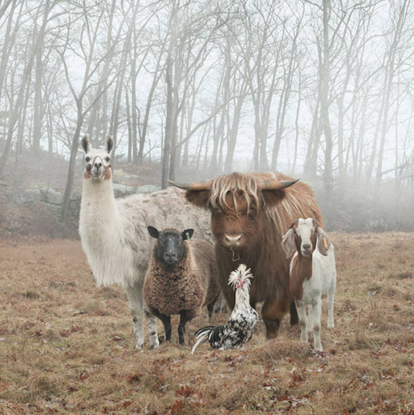 When Animals Look More Badass Than Your Favorite Music Band