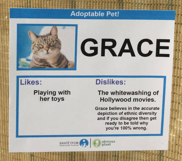These Cats Get Their Social Network Pages To Find A New Home Faster