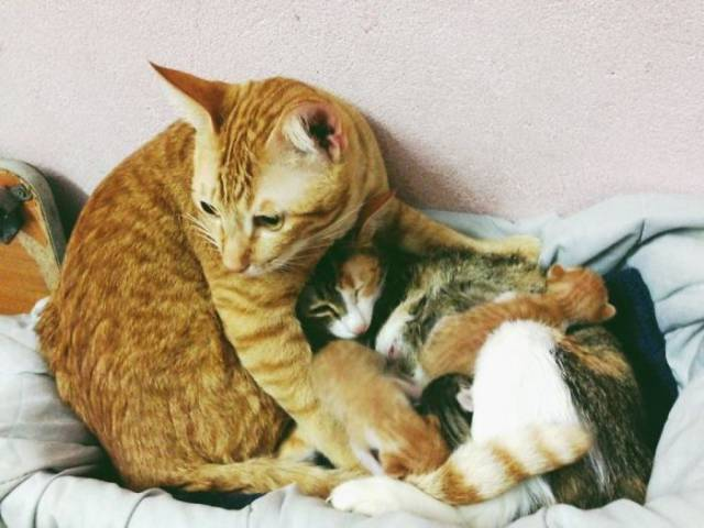 Woah, Turns Out Cats Can Be Loving Parents Too!