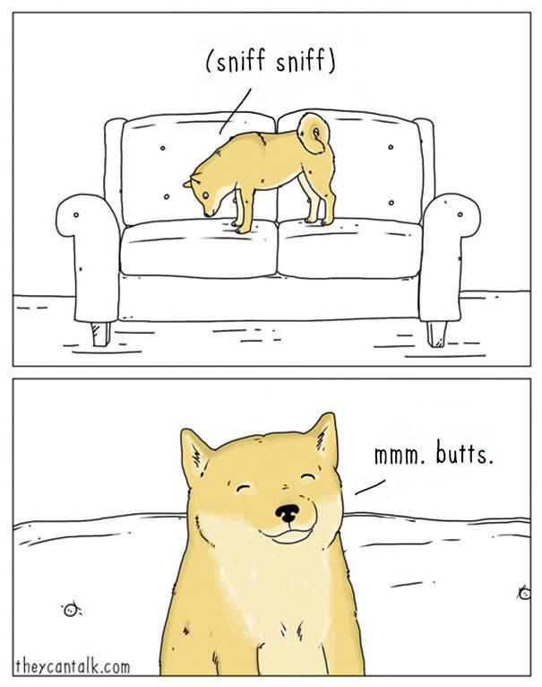 Animals Speak. We Just Don't Understand Them