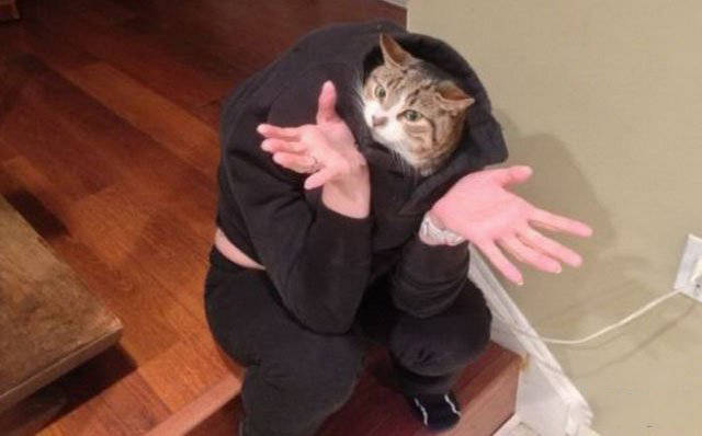 Help! My Human Is An Idiot!