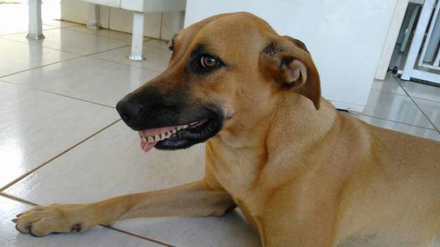 This Dog Really Knows How To Shock Her Owner With Her Hollywood Smile