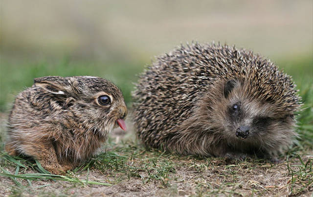 It's Impossible To Resist The Cuteness Of These Little Fellas And Their Tongues