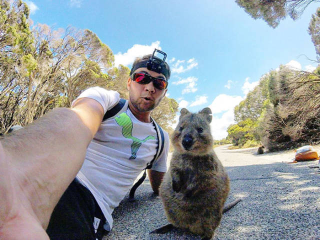 The Best Love Story Ever: Man Meets Quokka