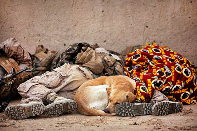 These Dogs Are Invaluable Examples Of Service And Devotion