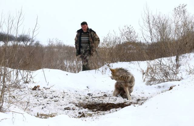 Chernobyl Catastrophe Aftermath Forced Humans To Leave, But Wildlife Thrives There