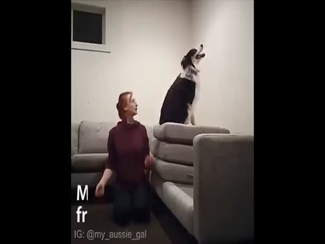 Damn, This Dog Is More Gifted Than Many Humans!
