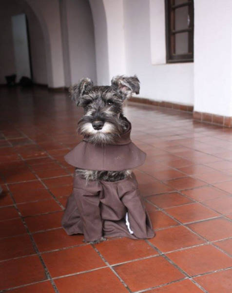 This Dog Was Homeless Until He Found Himself As A Monk In The Monastery
