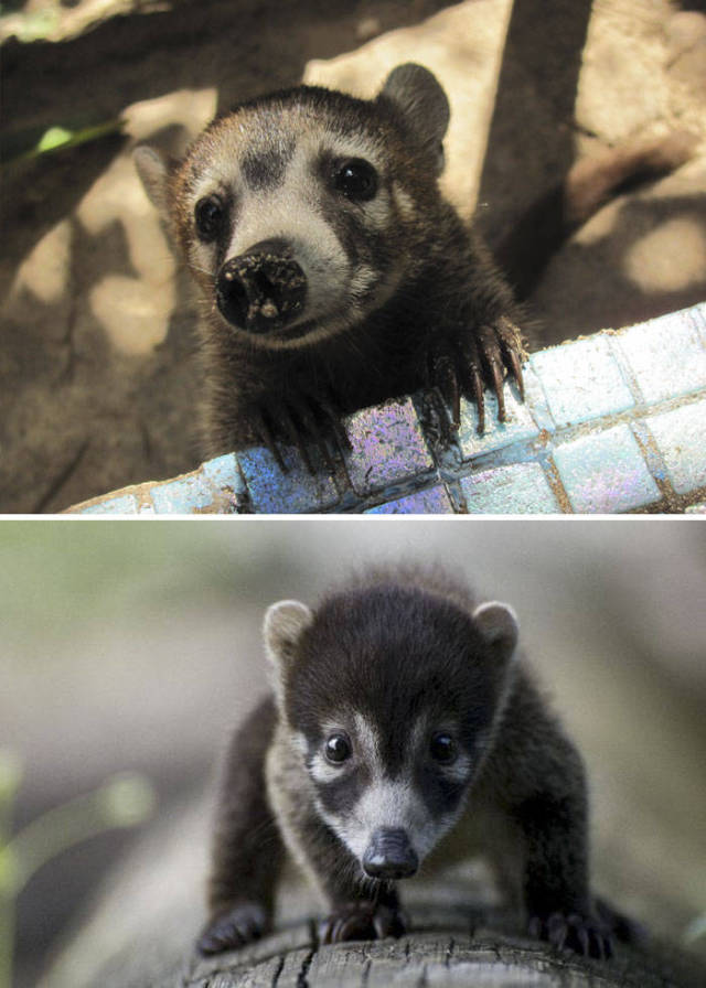 You Probably Didn't Even Know These Animals Existed – Let Alone Them Having Such Cute Babies