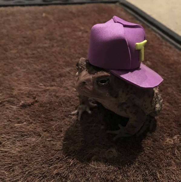 Toad Fashion Is A Real Thing Now!