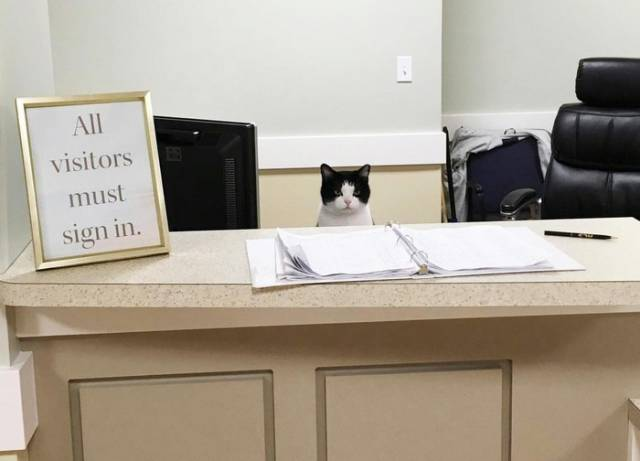 Meet Oreo – The First Cat Nurse