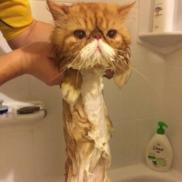 When Animals Reach Their Liquid State…