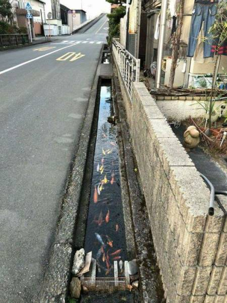 This Is What A Drainage Canal Should Look Like