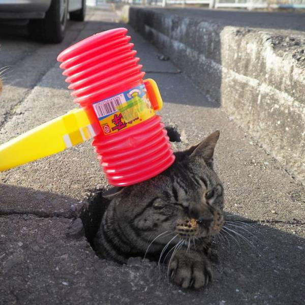 Cats Can Play Wherever They Want!
