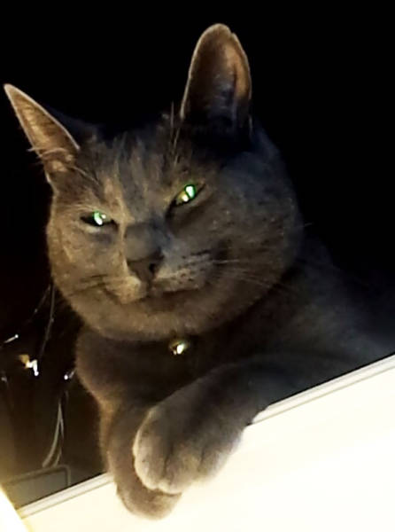Is Your Cat A Satanist Too?