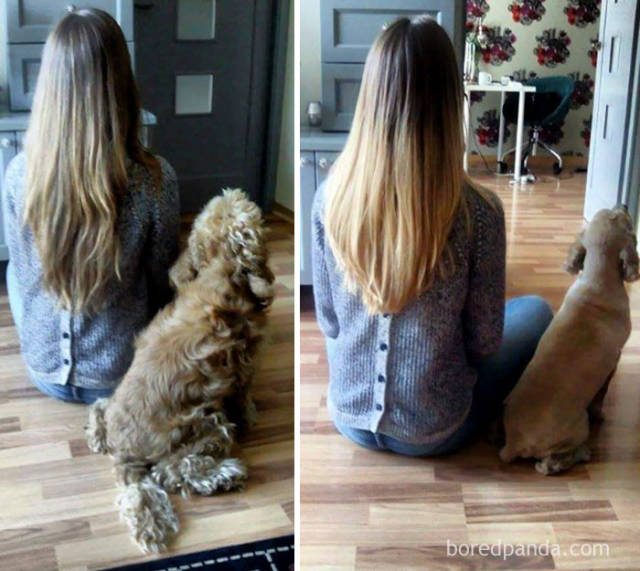 Every Dog Needs Its Cute Haircut