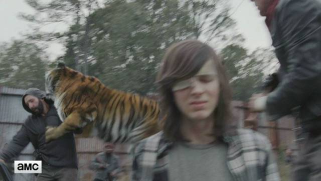 Nobody Has Expected What Tiger From Walking Dead Really Is