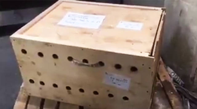 When This Box Remained At The Airport For 7 Days Nobody Expected What Could Have Been Inside