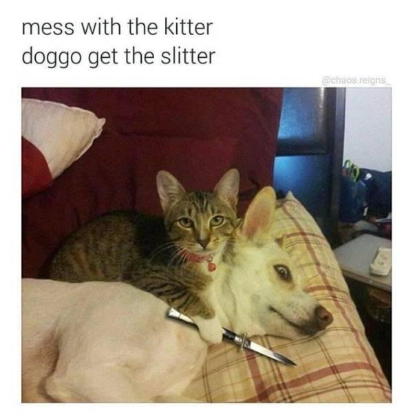 Kitties Bring In The Memes!