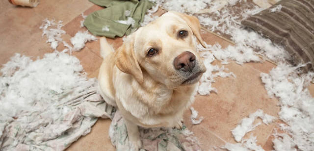 Your Pets Will Destroy Your House Given Half A Chance