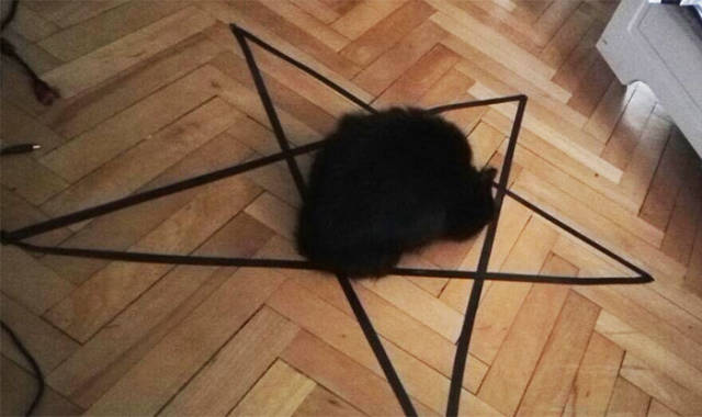You Will Never Again Dare To Say That Cats Are Not Satan's Worshippers