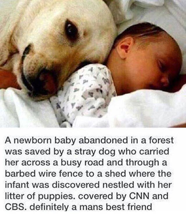 This Is Why We All Gotta Love Those Sweet Puppies
