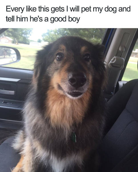 Dogs Bring You The Furriest Memes!
