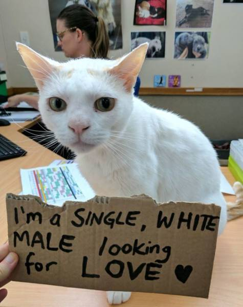 This Cat Had An Unusual Way Of Getting Adopted Faster