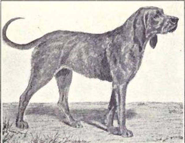 There Were So Many Awesome Dog Breeds That Are Sadly No More