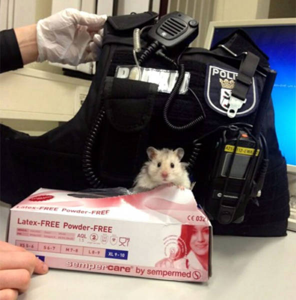 Berlin Police Didn't Expect To Rescue Their Future Squad Member